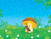 Ant sits under a mushroom in a forest in rain poster