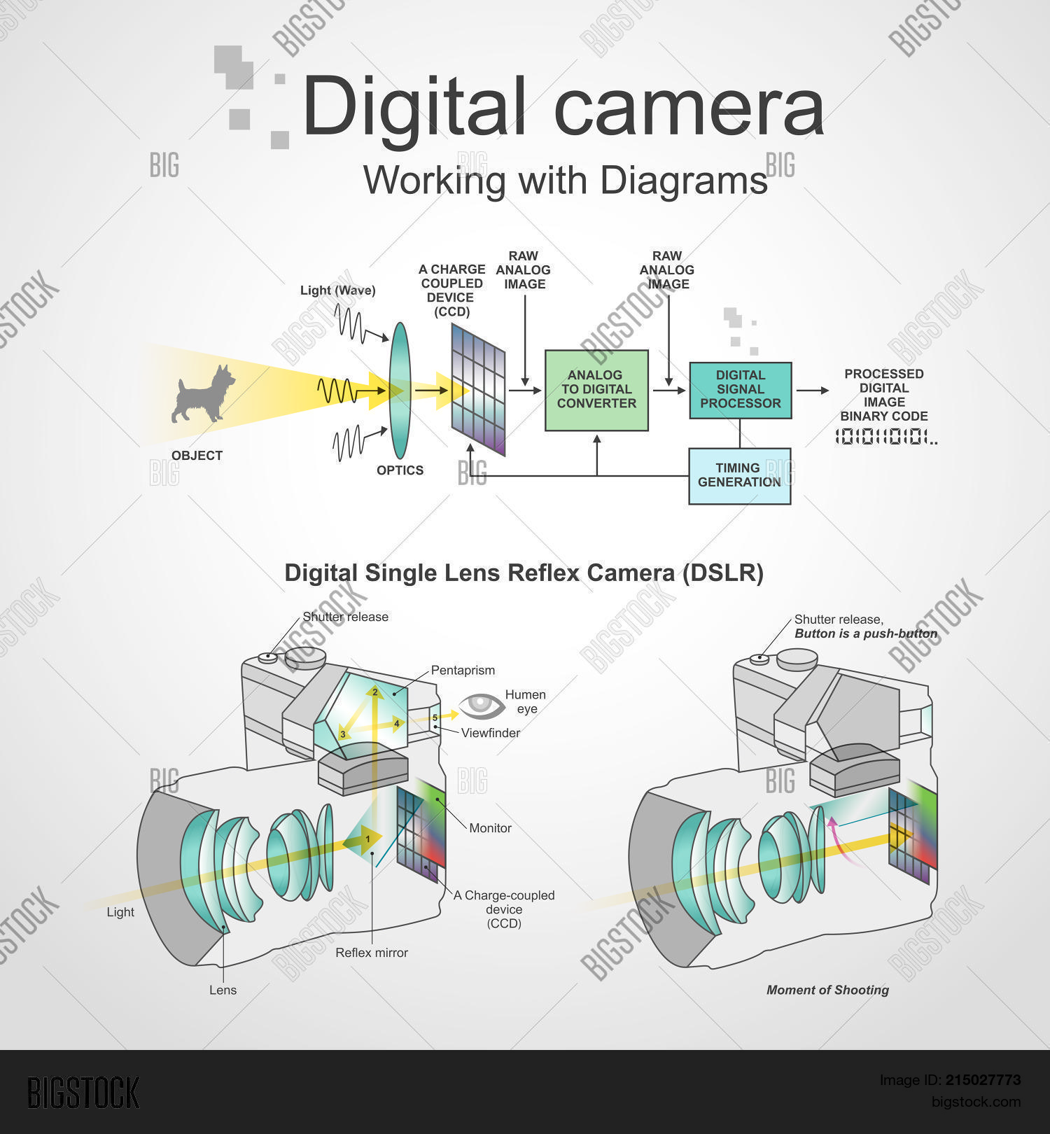 Digital Single Lens Vector Photo Free Trial Bigstock Working Of Cameras A Reflex Camera Is That Combines The Optics With
