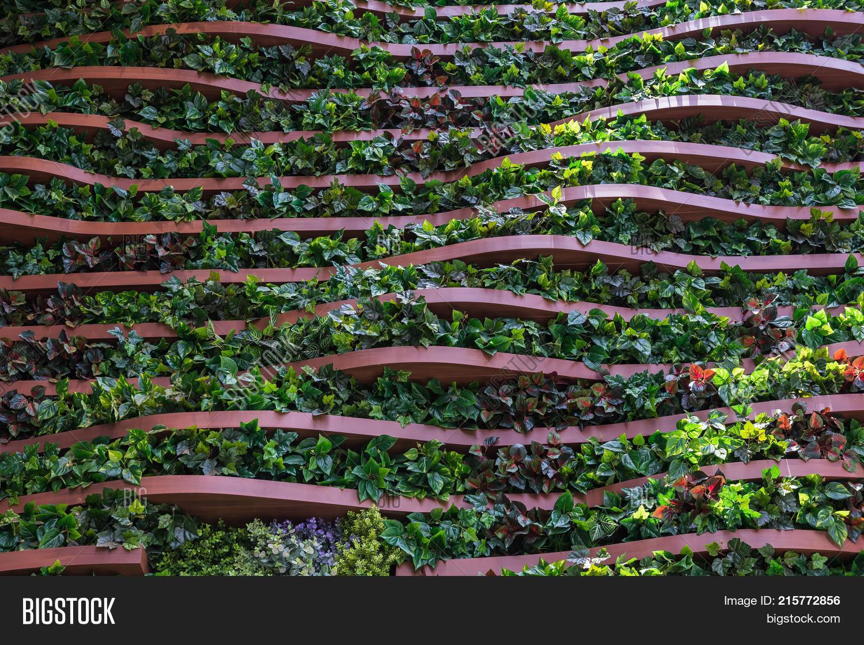 Vertical Garden Wall Image Photo Free Trial Bigstock