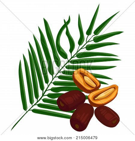 Delicious ripe dates fruits and green palm branch isolated vector illustration on white background. Plant full of vitamins realistic design