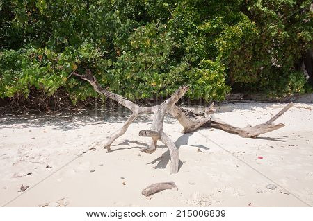 Wood on white sand beach at Thailand
