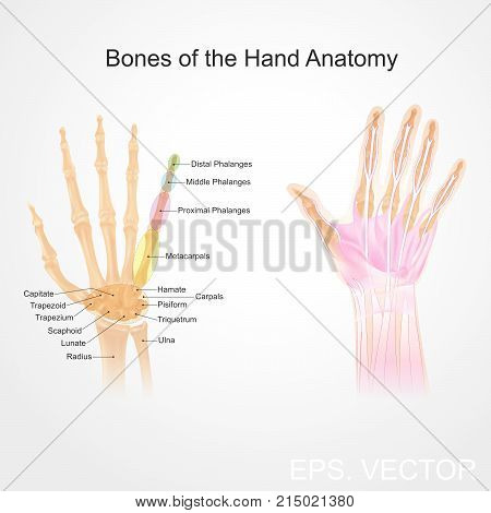 Fingers contain some of the densest areas of nerve endings on the body and are the richest source of tactile feedback. They also have the greatest positioning capability of the body thus the sense of touch is intimately associated with hands.