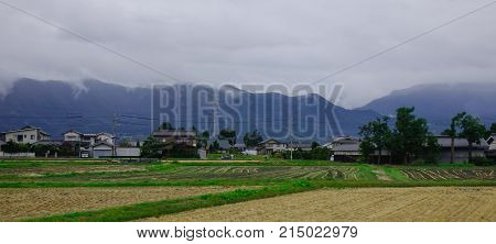 Rice Field In Nagano, Japan
