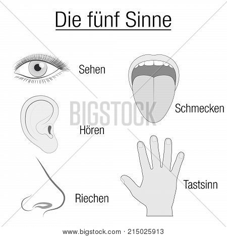 Five senses chart with sensory organs eye, ear, tongue, nose and hand and appropriate designation sight, hearing, taste, smell and touch in GERMAN LANGUAGE - schematic isolated vector illustration on white background.