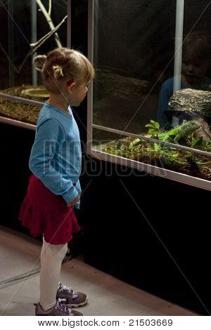 Child looking at iguana
