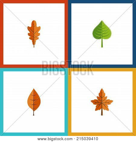 Flat Icon Leaves Set Of Alder, Hickory, Linden And Other Vector Objects