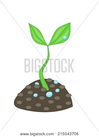 Growing Small Green Plant With Two Leaves And Water Drops From Soil Dirt Concept Of Grow
