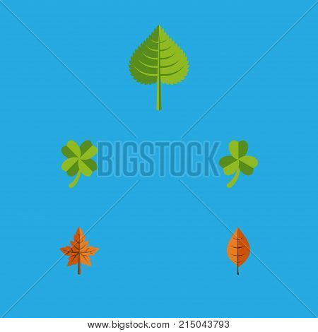 Flat Icon Maple Set Of Hickory, Leafage, Alder And Other Vector Objects