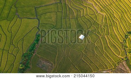 Aerial top view photo from flying drone of the Buddhist temple and fields in the countryside of Chiang Mai Northern Thailand