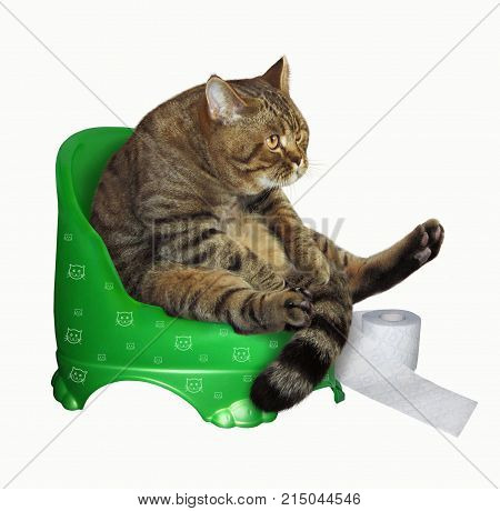 The cat with roll of toilet paper is on a children's potty. White background.
