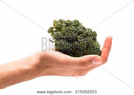 Healthy Nutrition And Vegan Diet Concept. Broccoli In Female Palm