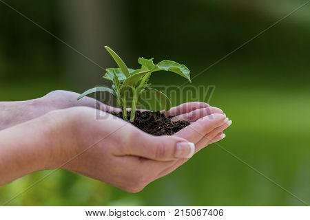 woman holds plant in hand