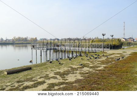 Pigeons On The Shore Of The Lake. Pigeons, Accustomed To Being Fed By Passers-by, Are Waiting For Fo