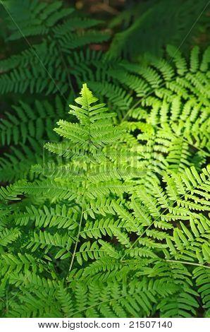 Background of a bright fern