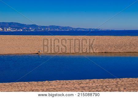 Gull. Seagull on the beach. Puerto Banus, Marbella, Costa del Sol, Andalusia, Spain.