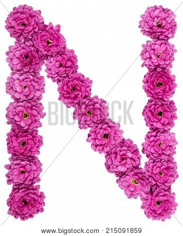 Letter N, Alphabet From Flowers Of Chrysanthemum, Isolated On White Background