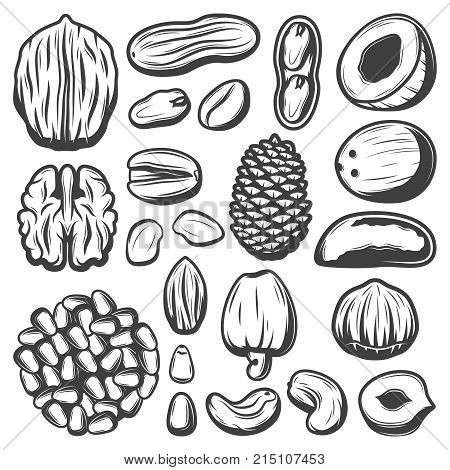 Vintage organic nuts collection with coconut pistachio cashew pecan almond peanut walnut macadamia brazil pine nuts isolated vector illustration