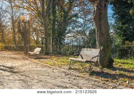 Benches Under The Sun In Autumn