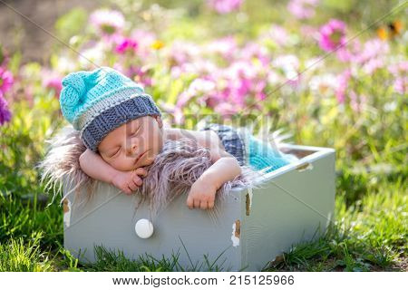 Cute Newborn Baby Boy, Sleeping Peacefully In Basket In Garden