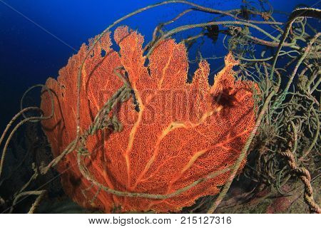 Environmental pollution problem - discarded fishing net on coral reef