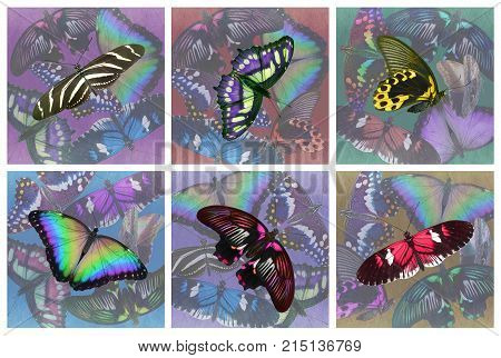 Set of six butterfly drinks coasters - 6 different multicoloured collage style realistic butterfly drinks mats 100mm square plus 3mm bleed ready for print
