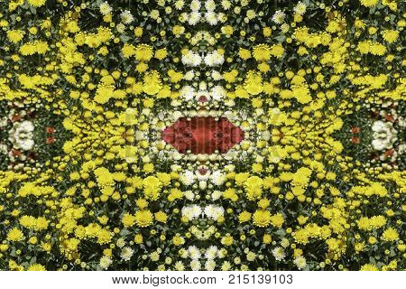 Pattern From Decorative Chrysanthemum