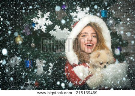 Dog Year Winter Holiday And Xmas.