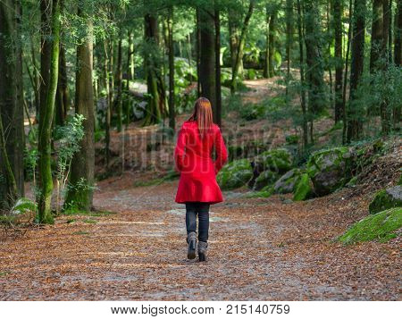 Young woman walking away alone on forest path wearing red long coat or overcoat. Girl back view of walk in woods of nature park during fall or autumn