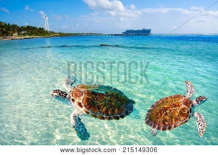 Mahahual Caribbean beach turtle photomount in Costa Maya of Mexico