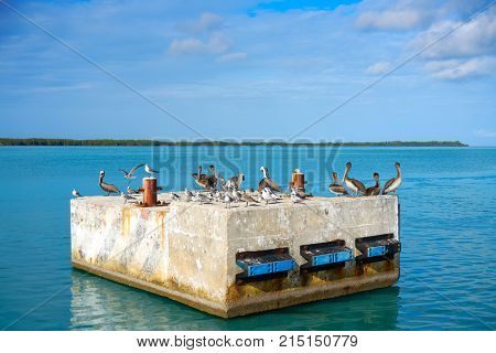 Chiquila port sea gulls and Pelicans in Quintana Roo Mexico
