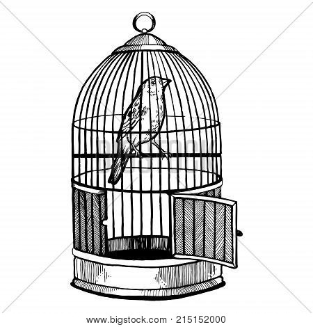 Canary bird in cage with open door engraving vector illustration. Scratch board style imitation. Hand drawn image.