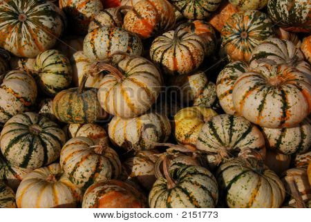 Gourds For Thanksgiving