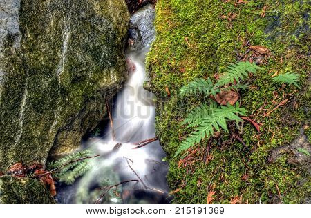 A little stream flows into a small water fall in Bellingham, WA.