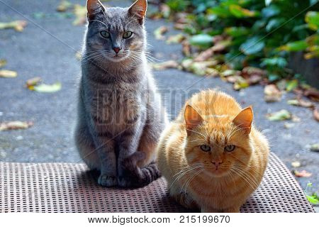 two cats sit on the doorstep in the street