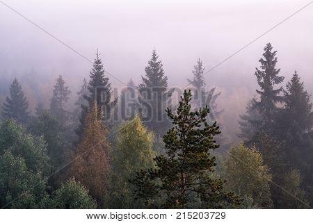 Morning fog and sunrise in Torronsuo National Park Finland