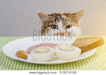 Tricolor cat steals sausage from the table.