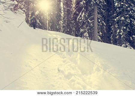Path trhough fresh snow. Winter forest, Pokljuka Slovenia