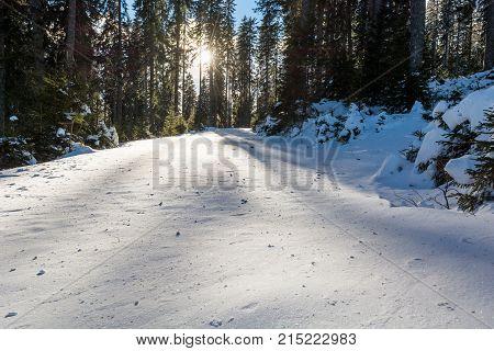 Fresh snow has fallen in forest. Pokljuka, Slovenia