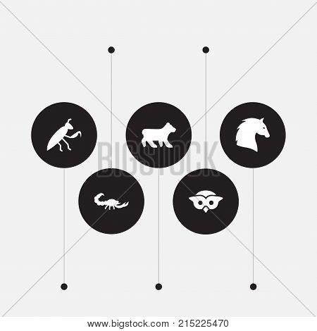 Collection Of Poisonous, Steed, Night Fowl And Other Elements.  Set Of 5 Zoo Icons Set.