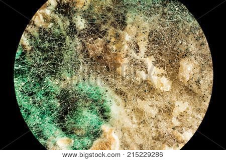 Spread Of Green Fungal Mold On Spoiled Food Products, View Through A Microscope