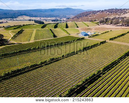 An aerial view of a vineyard at a winery