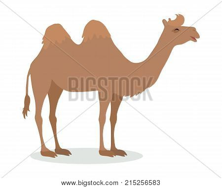 Bactrian camel cartoon character. Funny camel with two humps flat vector isolated on white. Fauna of Asia. Camel icon. Wild animal illustration for zoo ad, nature concept, children book illustrating