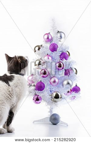 Cat with christmas tree. Domestic cat wants to play with christmas tree bauble Cat playing with christmas tree xmas ornaments bauble ball. Cute studio photo.