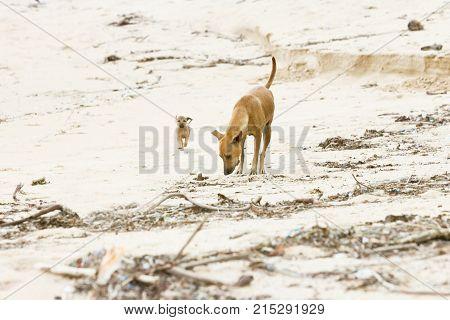 Dog-mummy Training The Offspring, Sri Lanka