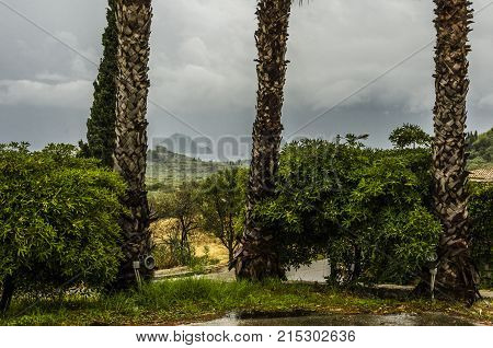 cloudy day palm trees and vegetation on the island of zakynthos in the background you see the Ionian sea and the outline of the island marathonisi on the bay of laganas