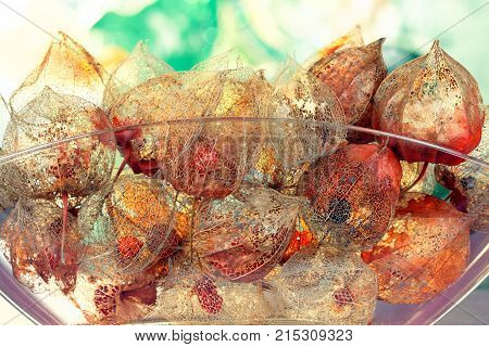 Autumnal Concept with lucent Sepals of Physalis alkekengi