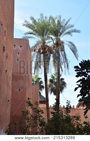 Palm trees in Marrakech palace in Morocco