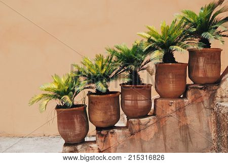 Small palm trees in flower pots on stairs beautiful and fresh ouside green plant street decoration Marrakech Morocco