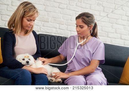 Young latina woman at work as veterinary, vet speaking with dog owner during house call. Animal doctor visiting sick pet at home and checking heartbeat