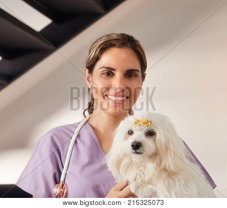 Confident young hispanic woman at work as veterinary, happy vet playing with dog during house call. Animal doctor visiting sick pet at home, smiling and loking at camera.
